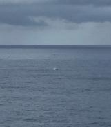 Whales having fun